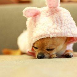 狗狗可爱卖萌搞笑图片