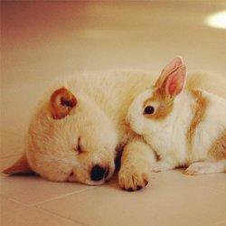 有趣可爱搞笑宠物狗狗图片