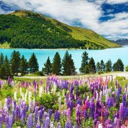 壮观的花海自然风景图片
