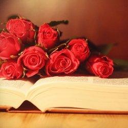 红玫瑰唯美图片