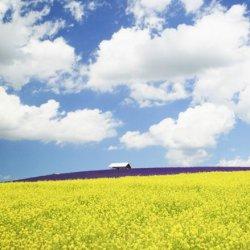 可爱大自然花草风景图片