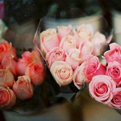 情人节粉色玫瑰花图片
