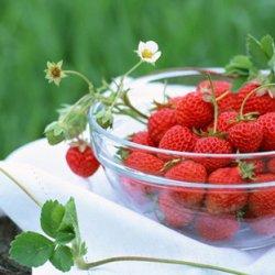 夏天水果美食可爱图片