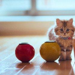 萌货猫咪可爱图片大全