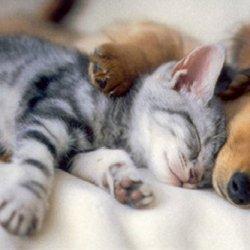 家有萌宠 可爱猫狗一窝