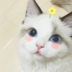 呆萌小猫咪可爱图片