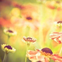 清新意境植物花卉图片
