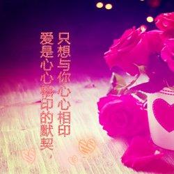 唯美意境玫瑰花带字图片