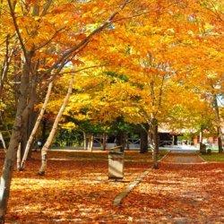 最美秋天红叶意境风景图片