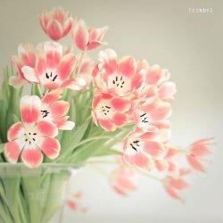 唯美花朵伤感心情图片