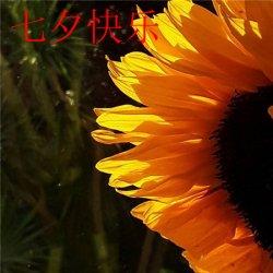 七夕带字图片大全唯美风景