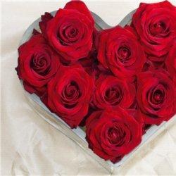 520图片大全浪漫玫瑰花