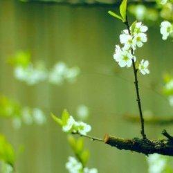 与春分有关的图片风景