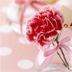 三八妇女节图片康乃馨花束