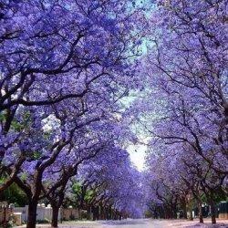 绝美的树花风景图片