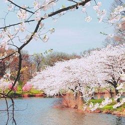 好看的春天花开风景图片