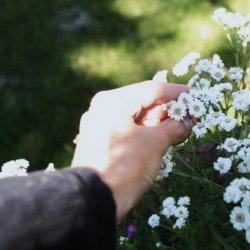 伤感可爱花朵意境图片