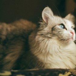 好看的猫咪唯美图片