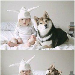 可爱宝宝和狗狗图片