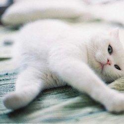 可爱萌萌的宠物猫咪图片