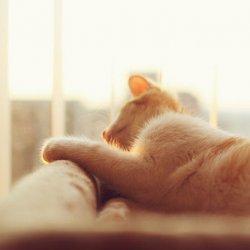 萌宠可爱小猫咪图片