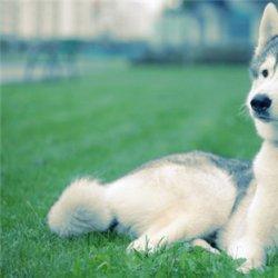 帅气可爱的狗狗图片大全