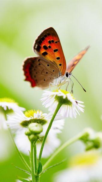 你若盛开蝴蝶自来